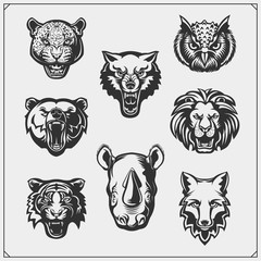 Vector set of animals head. Fox, wolf, tiger, rhino, bear, owl, leopard and lion.