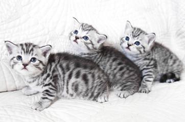 Three kittens frightened.