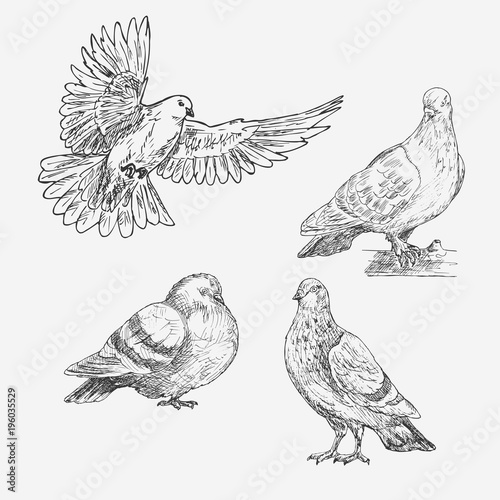 set of hand drawn doves sketch of doves