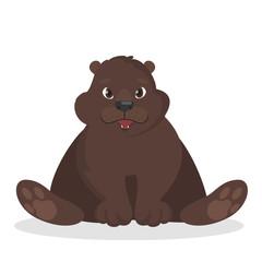 Isolated baby bear.