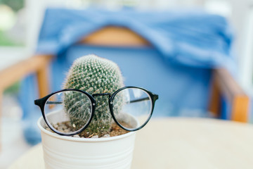 Cactus pot and glasses in cafe.