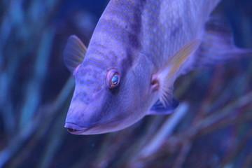 Portrait of a Fish