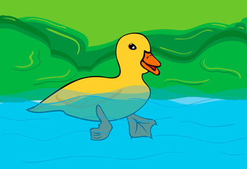 duck in the lake , swimming in the water