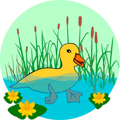 duck in the lake with flowers, swimming in the water