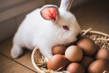 Little hare and chicken eggs