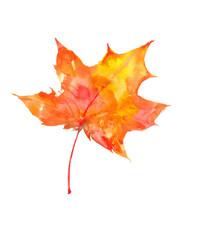 Beautiful bright autumn leaf. Watercolor autumn leaf. Watercolor background.