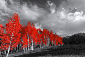 Red trees in surreal black and white landscape