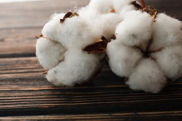 Dry blossom cotton close up