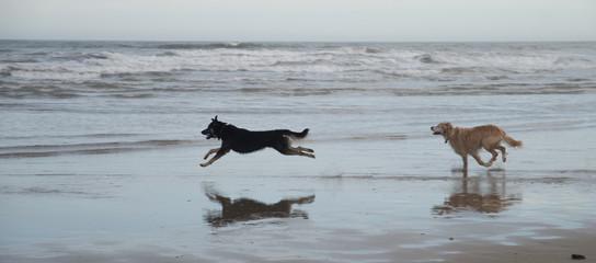 Chien jouant dans la mer
