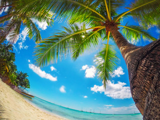 Paradise beach on tropical islands. Saona Island,  Dominican Republic.