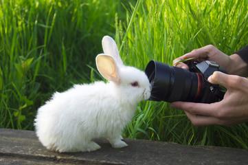 White rabbit looks at the camera lens