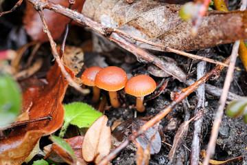 Pilz, Pilze im Wald