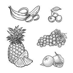 Botanical illustration. Fruit. Vector graphics.
