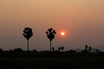 beautiful sunrise over the paddy field