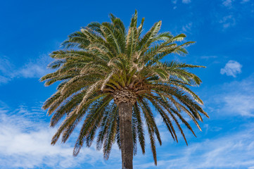 Palm tree against blue sky on the background