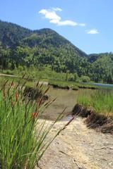 Natur Gräser See