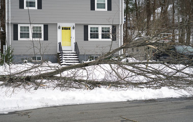 fallen tree during snow storm in front of the house