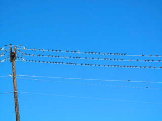 Birds on wires and electric pole on a blue sky background. Flock of pigeons sitting on electric wire - autumn view.