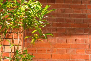 レンガの壁と観葉植物