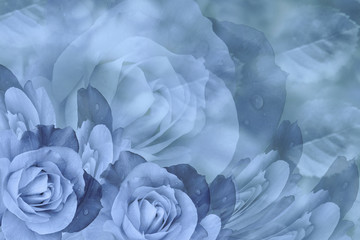 Floral  blue beautiful background.  Flower composition  of  roses  flowers.  Close-up.  Nature.