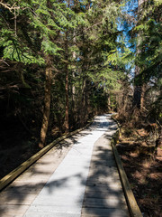 trees on both sides cast shadow on a wooden trail walkway in the forest