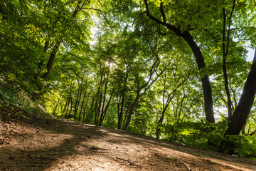 Nature green wood sunlight backgrounds. Forest trees