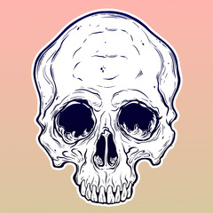 Human skull hand drawn in tattoo style.