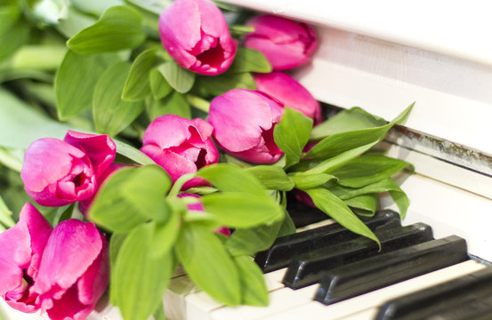 Pink tulips and notes. Pink tulips on white piano