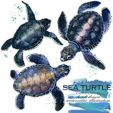 sea turtle hand drawn watercolor illustration set