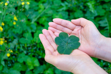 Hand holding a leaf clover