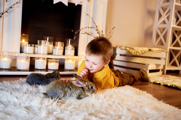 Little boy enjoy at home together with his rabbit. Cute boy admiring grey rabbits in a warm light room