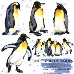 Emperor penguin hand drawn watercolor illustration set