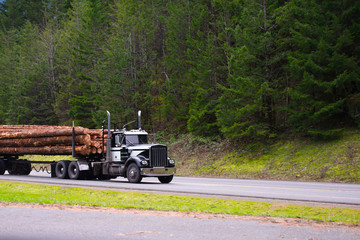 Black powerful big rig semi truck transporting long logs on the road with forest background