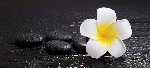 La pose en embrasure Frangipanni Spa still life with plumeria flower
