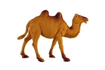 Home Bactrian camel