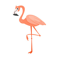 zoo animal - flamingo