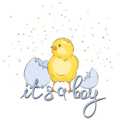 Newborn baby card -- it's a boy / Vector illustration, banner with chick
