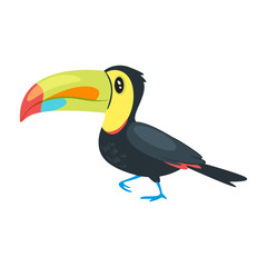 zoo animal - toucan