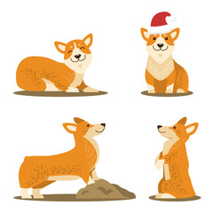 Corgi Dog Set of Four Pictures Vector Illustration