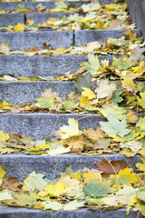 yellow autumn leaves on granite steps. Autumn Park