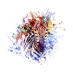 Vector color illustration of zebra