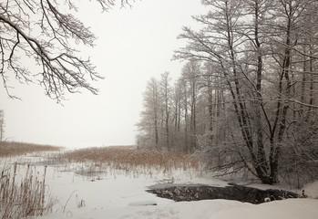 Belarus, Grodno, Snowy fairy forest around Molochnoe Lake.