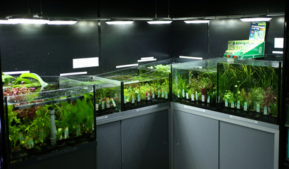 "Aquarium plants are seen for sale at ""Wildwoods"" in Crews Hill, Enfield"