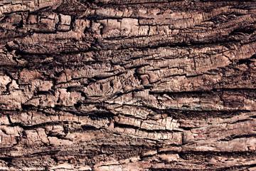 Tree bark background macro
