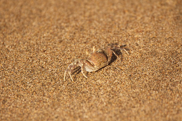 Small crab camouflaged on the beach sand