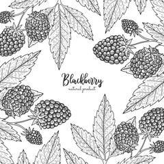 Berry engraving illustration with blackberry. Detailed frame with barberries. Hand drawn elements for invitations, greeting cards, wrapping paper, cosmetics packaging, labels, tags, posters etc.