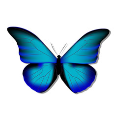 morpho, butterfly blue morph on white background with shadow, gradient, 3d