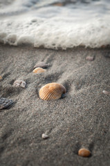 Seashell at the Beach
