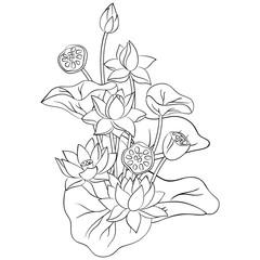 vector contour  lotus flower on white simple hand drawn meditaton symbol