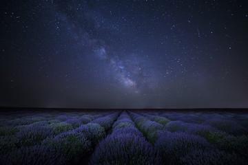 The Milky Way galaxy rising above lavender field Fotoväggar